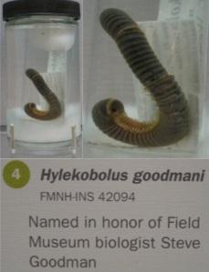 Steve Goodman Field Museum